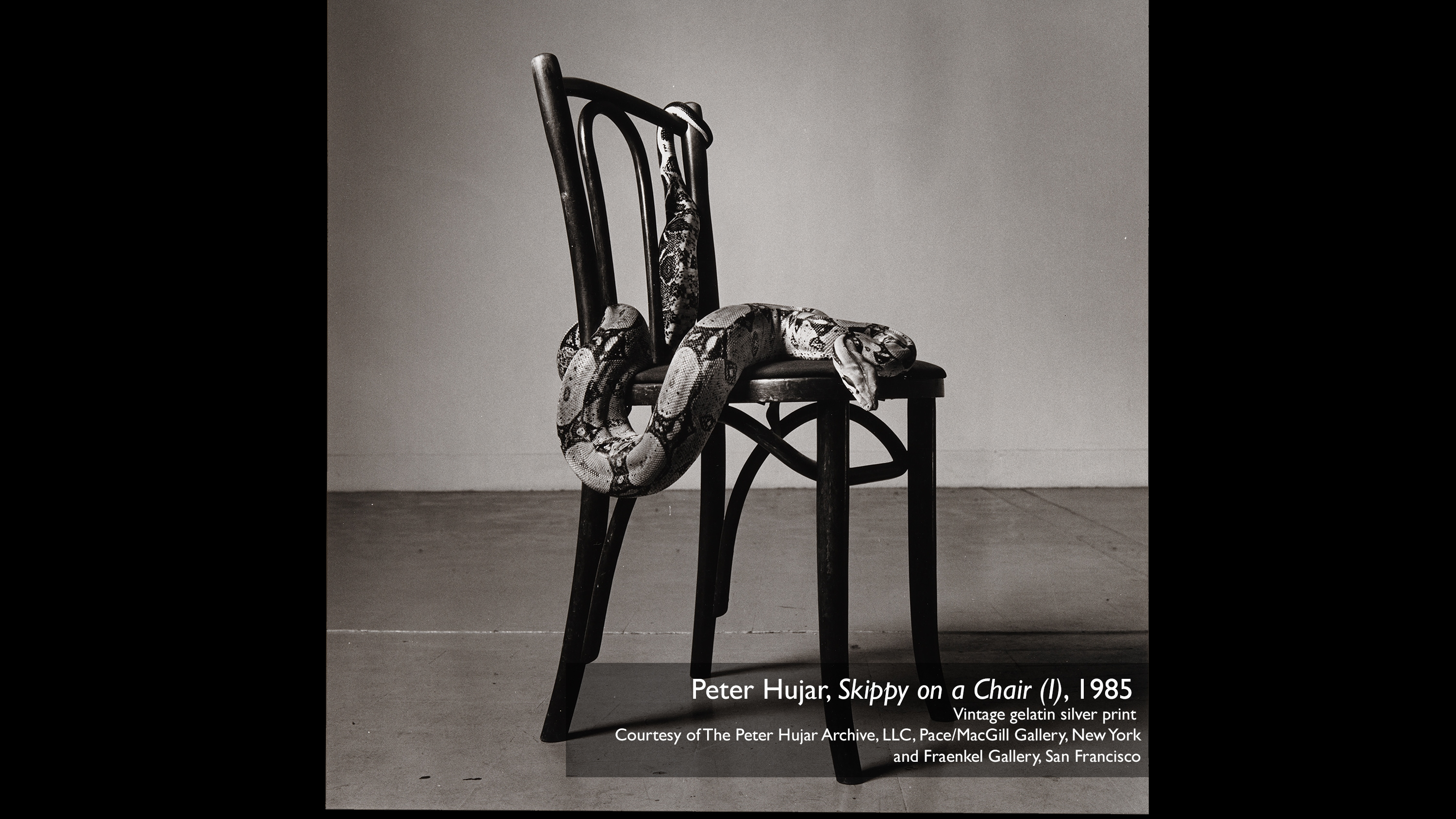 Peter Hujar, Skippy on a Chair (I), 1985  vintage gelatin silver print  Courtesy of The Peter Hujar Archive, LLC, Pace/MacGill Gallery, New York and Fraenkel Gallery, San Francisco