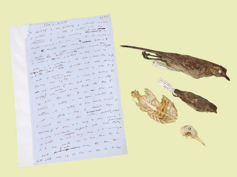 Darwin's On the Origin of Species manuscript